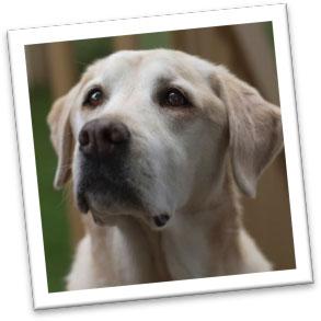 Canine ChrisPBacon